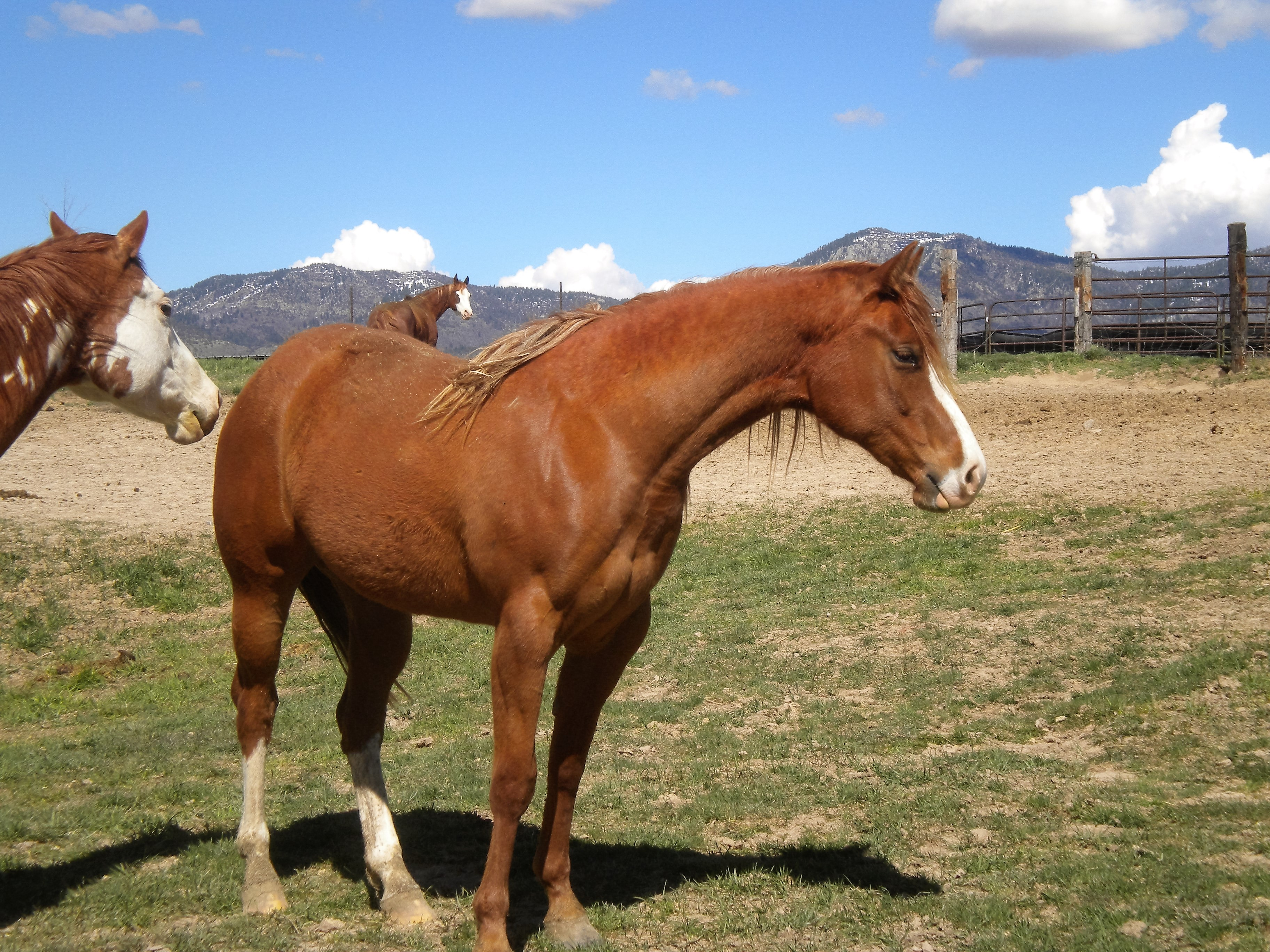 Thoroughbred Horses for Sale - All In Line Stables, Ocala